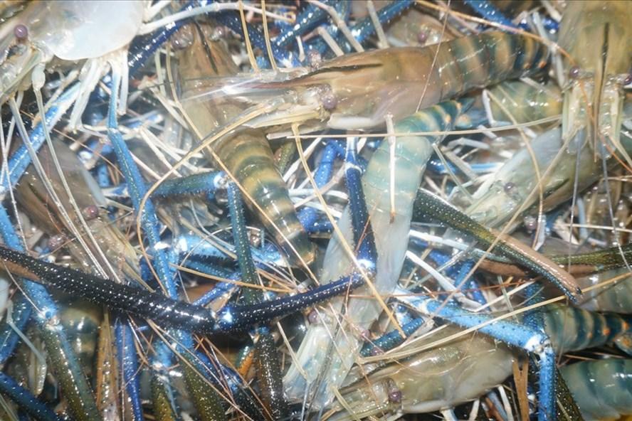 Nuôi trồng thủy sản theo tiêu chí an toàn, bảo vệ môi trường