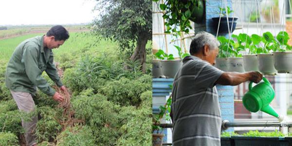 Hội ND Nam Định cung ứng hơn 15.000 tấn phân bón Lâm Thao trả chậm