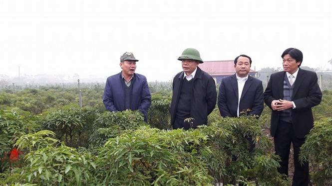 Xây dựng Hải Hậu thành huyện nông thôn mới kiểu mẫu