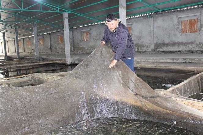 Nghĩa Hưng: Đầu xuân, vua cá bống bớp tiết lộ cách nuôi cá trong ao nhà, kiếm tiền tỷ/năm