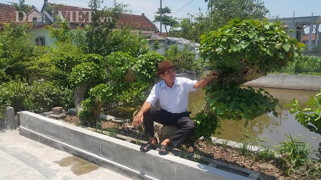 """Nam Định: Siêu phẩm chưa từng có: Cây na nước """"khủng"""" dáng rồng bay huyền bí"""