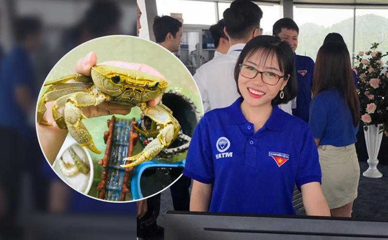 Cô gái Nam Định nuôi cua đá như thú cưng: 2 lần thoát khỏi nồi đã thành cái duyên