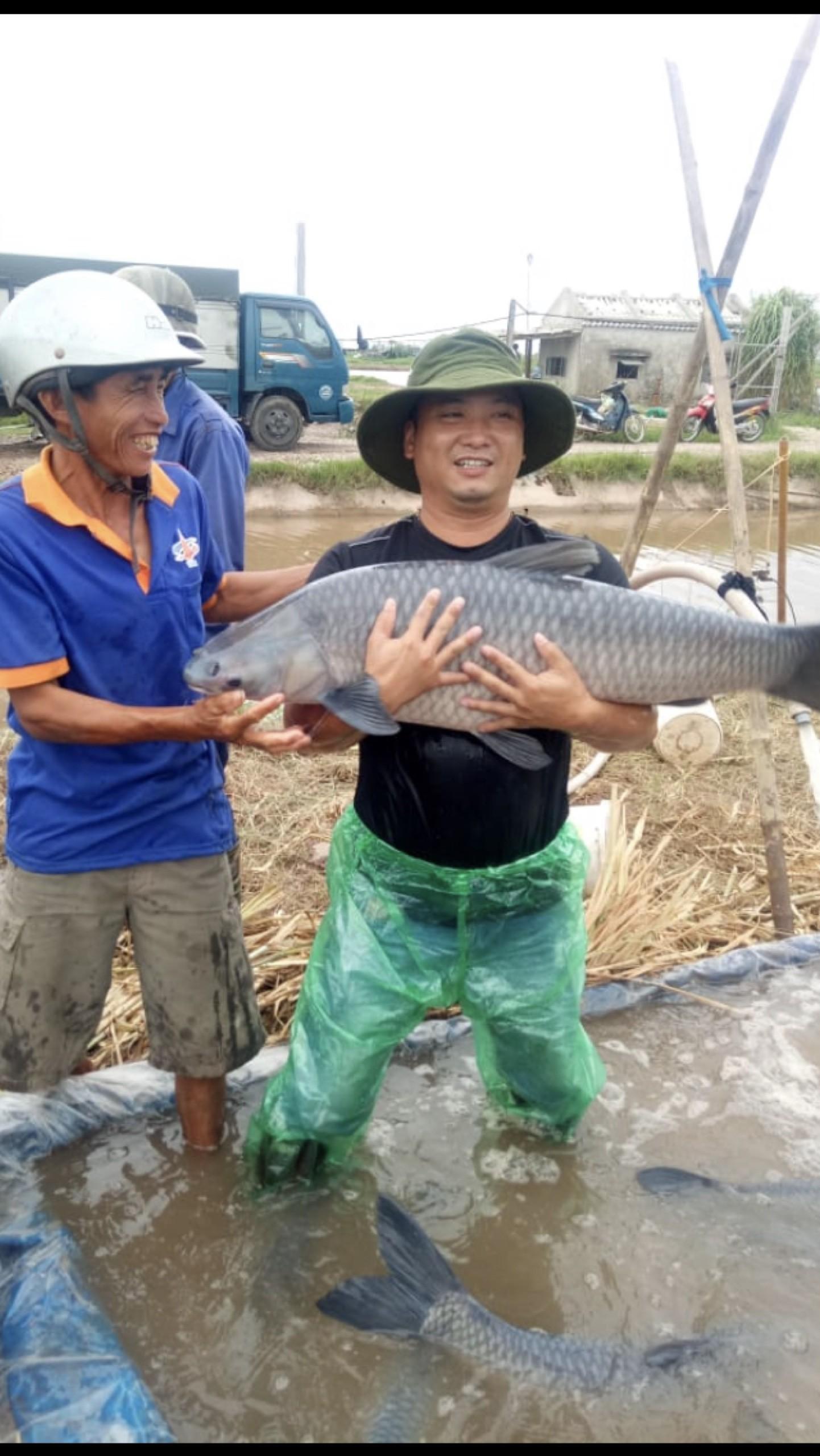 """Nam Định: Ao cá """"khủng"""" nuôi toàn cá trắm đen """"siêu to khổng lồ"""", doanh thu 6-7 tỷ/năm"""
