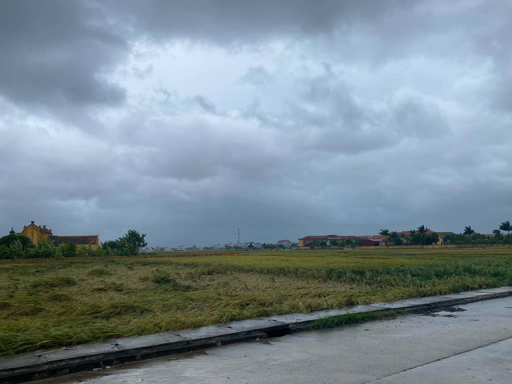 Nam Định Tập trung khắc phục thiệt hại về sản xuất nông nghiệp sau mưa bão
