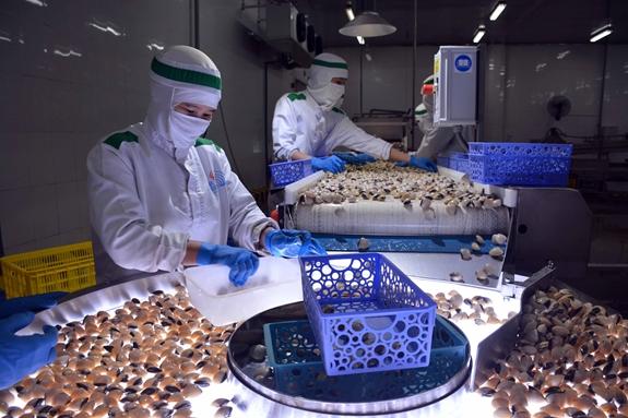 Lễ công bố chứng nhận ASC đầu tiên cho ngao trắng tại Nam Định