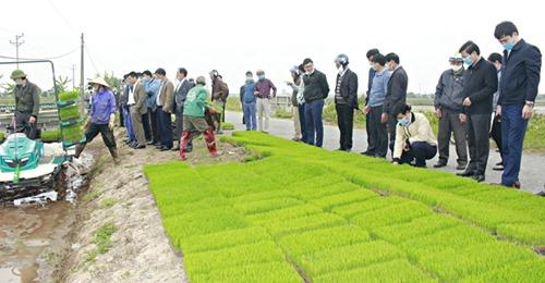 Huyện Giao Thủy: Tham quan mô hình gieo sạ và ᴍáʏ ᴄấʏ ᴛạɪ xã Giao Tiến – Tin Mới