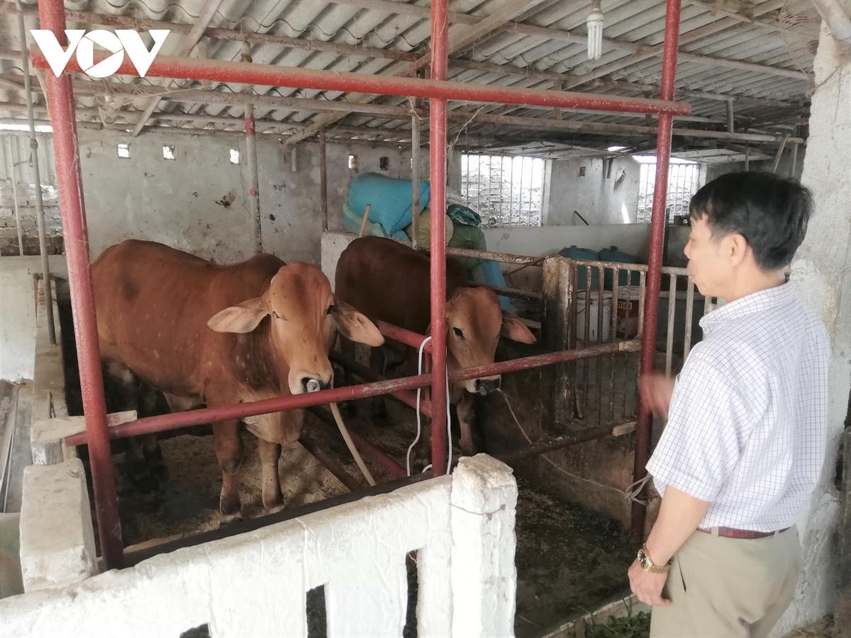 Vì sao dịch viêm da nổi cục lây lan ở Nam Định?