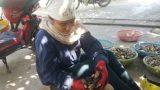 Người dân Nam Định kiếm 500.000/ngày nhờ đi 'săn' sam đất
