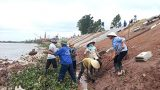 Di dân khẩn cấp vùng sạt lở bãi sông Ninh Cơ (Nam Định): Nhiều năm triển khai vẫn chậm tiến độ