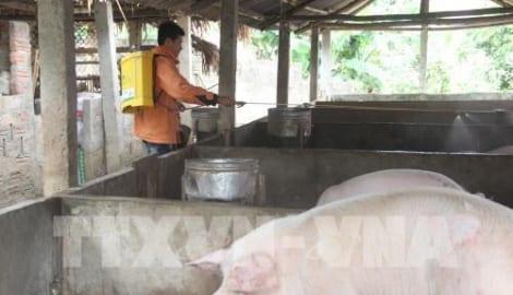 Nam Định ngăn dịch lở mồm long móng lan rộng