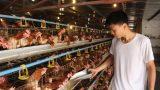 Đáng nể trang trại sản xuất trứng gà sạch, thu 2 tỷ đồng/năm ở Mỹ Lộc
