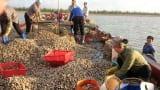 Cuộc sống cần lao của ngư dân trên cửa biển Ba Lạt