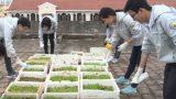 Học sinh THPT Lê Hồng Phong biến nóc tòa nhà thành vườn rau sạch