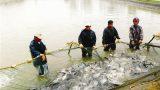Nghĩa Hưng phát triển thế mạnh nuôi thủy sản