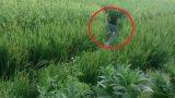 Nam Định: Hoảng hốt phát hiện xác nam thanh niên bên bẫy chuột