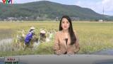 Nông nghiệp Nam Định thiệt hại nặng nề do mưa lũ