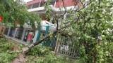 Nam Định: Hỗ trợ nông dân 874 tấn hạt giống khôi phục sản xuất sau bão
