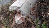 Cột điện đổ hàng loạt tại Nam Định: Chẳng ai nhận trách nhiệm?!