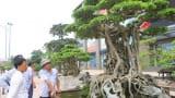 Những cây cảnh có giá hàng triệu USD ở Việt Nam