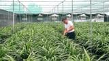 Ông chủ vườn địa lan lớn nhất Việt Nam