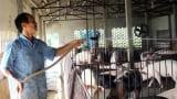 Người đầu tiên ở Nam Định nuôi lợn sạch bằng thảo dược quy mô lớn