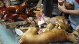 Thịt chó: Ngon ít sợ nhiều!