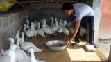 Nam Định đột phá từ tái cơ cấu nông nghiệp