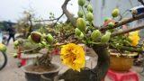 Tết về sớm trên đất cây cảnh Nam Trực Nam Định