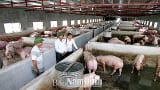 Hải Hậu: Trở thành tỷ phú từ mô hình trang trại