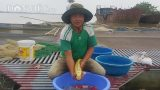 Mỹ Lộc: Nuôi loài cá nghìn đô trên sông Hồng, mỗi năm bỏ túi cả tỷ đồng