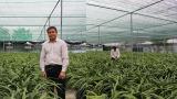 Mỹ Lộc: Đáng nể vườn địa lan Hoàng Vũ đạt kỷ lục lớn nhất nước