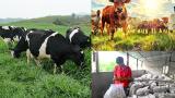 Ý Yên: Ứng dụng công nghệ sinh học chế biến thức ăn chăn nuôi từ dược liệu