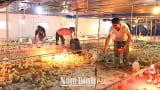 Nghĩa Hưng: Chủ động phòng, chống rét bảo vệ đàn gia súc, gia cầm