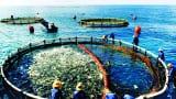 Nam Định nỗ lực tái tạo và bảo vệ nguồn lợi thủy sản