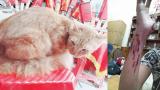 Chàng trai Nam Định bị mèo cưng cào rách tay cảnh báo dân mạng