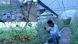 Mỹ Lộc: GĐ Cty TNHH Nông nghiệp Hải Đăng làm giàu từ nông nghiệp tại quê nhà