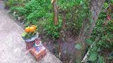 Một phụ nữ bị hàng xóm đâm vì tưới cây bằng phân xanh