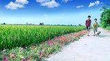 Nam Định: Xây dựng nông thôn mới kiểu mẫu
