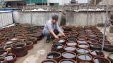 Nước mắm Giao Châu