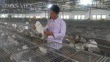 Nam Định: Giám đốc trẻ ở làng nuôi thỏ bán cho công ty Nhật