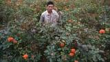 Về làng hoa lớn nhất Tỉnh Nam Định