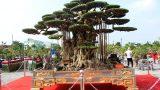 Hải Hậu: Trải thảm đỏ đón cây dát vàng 10 tỷ xôn xao khắp chốn