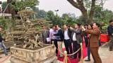 """Xôn xao thương vụ mua bán """"siêu cây"""" 8 tỷ, độc nhất Việt Nam có nguồn gốc Nam Định"""