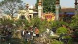 Trù phú làng nghề cây cảnh Vị Khê