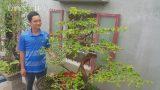 """""""Cụ"""" hoa giấy dáng """"siêu phàm"""", còi dí mà giá hơn 100 triệu ở Nam Định"""