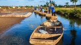 Hải Hậu: Hạt Muối Quê Tôi Bước Vào Trong Thơ Ca