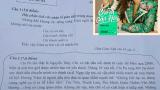 Đề thi Văn Lớp 10 yêu cầu HS hóa thân vào Chi Pu kể về cảm xúc khi bị Hương Tràm đá xéo