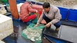 """Nghĩa Hưng: Sắp đến Tết, ngư dân miền biển vẫn ra khơi """"săn"""" hải sản cuối năm"""