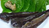 """MÓN NGON NGÀY TẾT: Cá bống bớp 300.000 đ/kg được chị em """"săn"""" ăn Tết"""