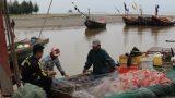 Nam Định kết hợp tuyên truyền với kiểm tra, xử lý nghiêm các tàu cá đánh bắt tận diệt